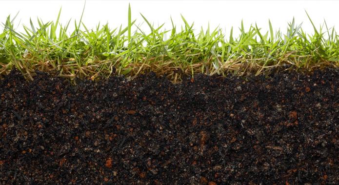 Sanidad del suelo: Salud del hombre